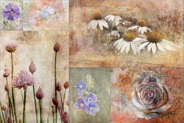 Collage beauties of nature von Claudia Gründler