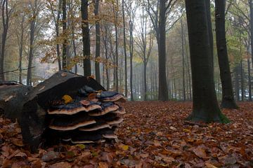 Herfst van Han Bouwmeester