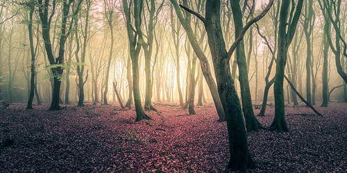 Panorama forest von Joost Lagerweij
