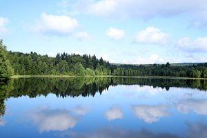 See im Wald von Heike Hultsch