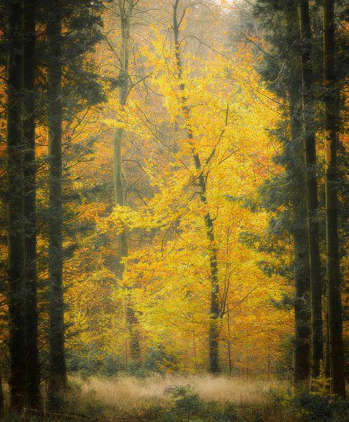 Geel in het herfstbos van Sjaak den Breeje