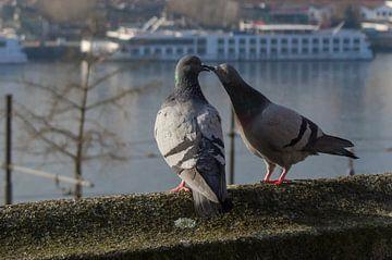 Twee duiven op de rand van een gebouw