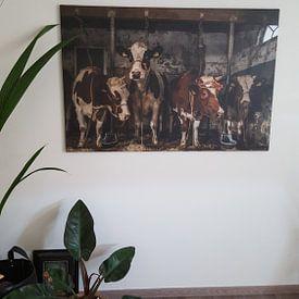 Klantfoto: Koeien in oude koeienstal van Inge Jansen, op canvas