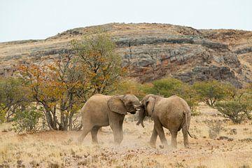 Rüsselspiel - Gaming elephants with their trunks van Britta Kärcher