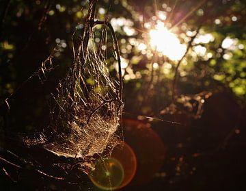 Spiderweb Lensflare sur joey berkhout