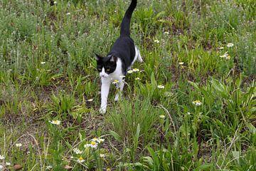 kat aan de wandel in een grasveld von Frans Versteden