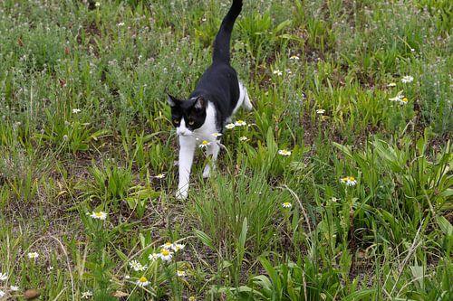 kat aan de wandel in een grasveld