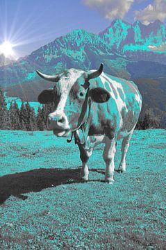 Koe aqua in de bergen