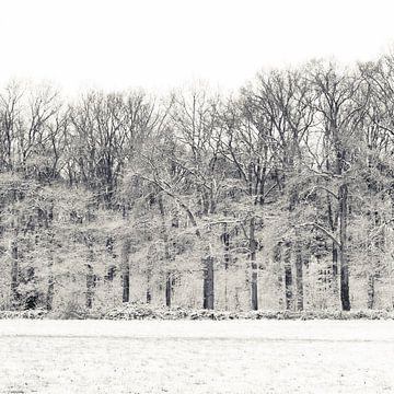 Winterse bos van