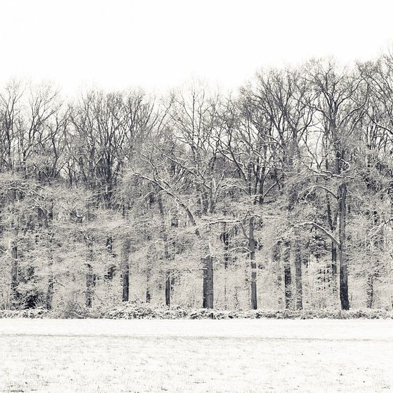 Winterse bos van Ada Zyborowicz