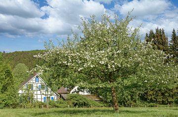 Frühling im Bergischen Land bei Solingen von Peter Eckert