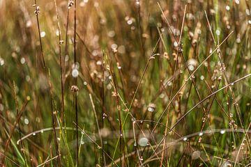 Regendruppels in het hoge gras van Dieuwertje Hurkmans