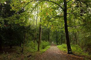 Pad door bos bij Nieuw Amelisweerd