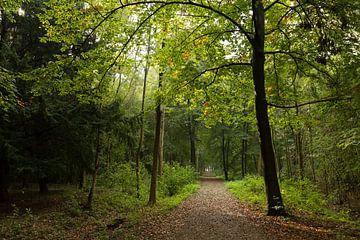 Pad door bos bij Nieuw Amelisweerd van Marijke van Eijkeren