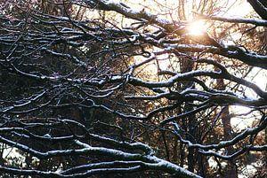 Winterzon van