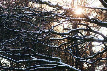 Winterzon sur
