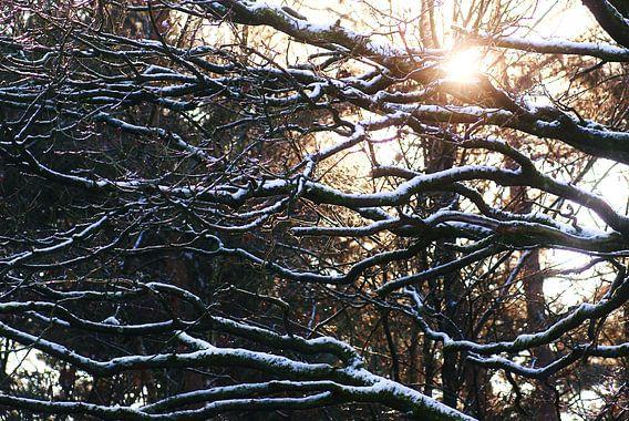Winterzon van Robbert Strengholt