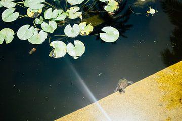 Tortue dans l'étang sur Patrycja Polechonska