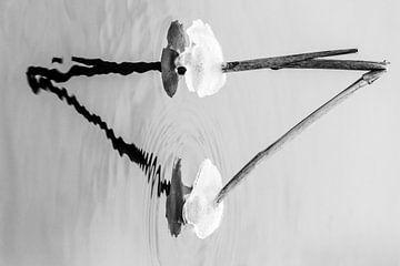 Gefrorenes Schilf von Charlotte Bakker