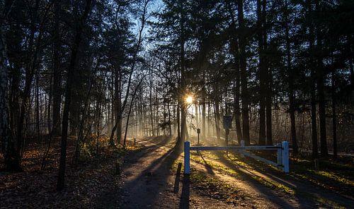 Enter the woods van