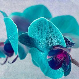 Gevlekte orchidee, turquoise van Rietje Bulthuis