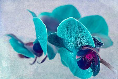 gevlekte orchidee, turquoise