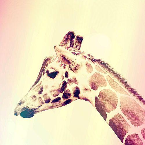 De Giraffe van