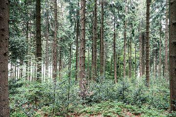 In het bos.. van Miranda van Hulst