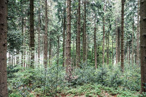 In het bos..