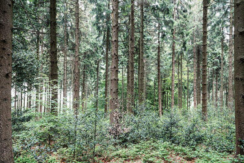 Dans les bois.. sur Miranda van Hulst