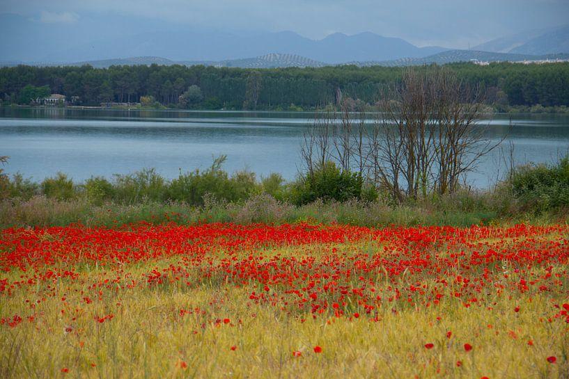 Poppies Lake van Cornelis (Cees) Cornelissen