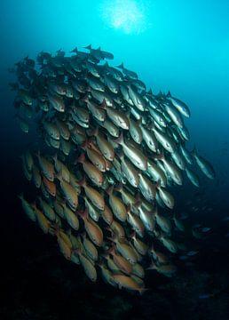 Diklipvissen van Filip Staes