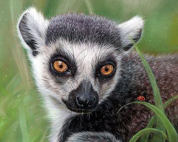 Dessin du lémurien à queue annelée Leontine van Vliet sur Leontine van Vliet