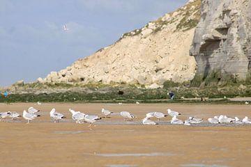 Möwen am Strand von Joran Keij