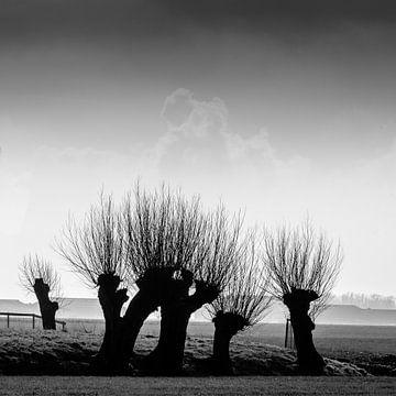Pollard Weiden, Risse an kalten Tagen. von Tony Buijse