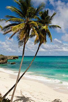 Karibikstrand von Christoph Schaible