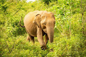 Olifant in de jungle van Nicole Nagtegaal
