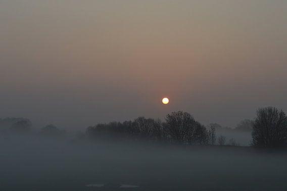 Nevelige zonsopkomst in Rivierenland Betuwe
