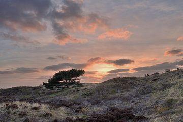 Texelbaum in den Dünen von John Leeninga