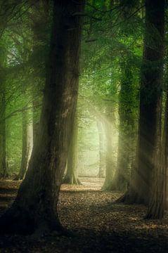 Licht in de duisternis von Klaas Fidom