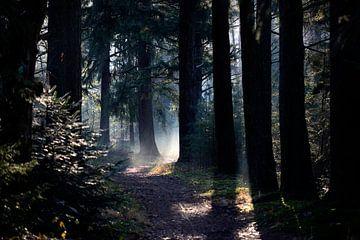 Zonnestralen in donker herfstbos van Edwin Butter