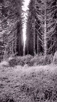 Woods of Hautes des Fagnes  von Twan van G.