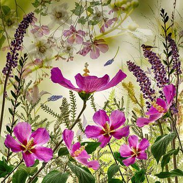 Hibiscus et plus... sur Klaartje Majoor
