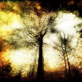 dreigend bos van Peter Baak