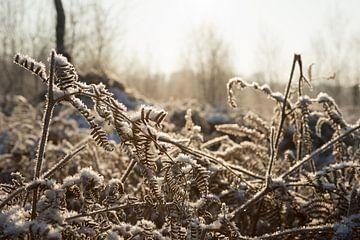 Bevroren licht von Jelle Dekker