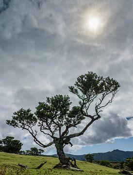 Sonnenbaum von Steven Driesen