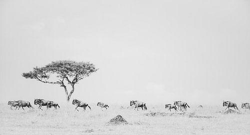 A never ending story - de wildebeest migratie
