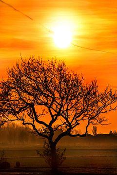 Zonsondergang in de Hallumerhoek van Friesland met boom van