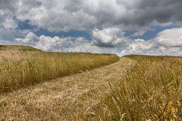 pad door het weiland van Contrast inBeeld