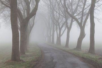 Foggy road van Liesbeth Steller